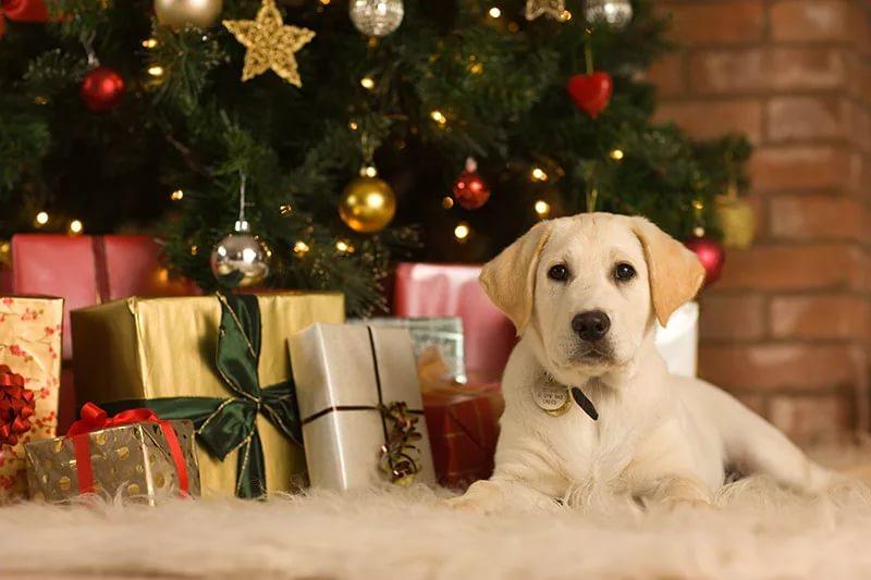 32 млн руб. наконфеты: Казань готовится закупать новогодние подарки